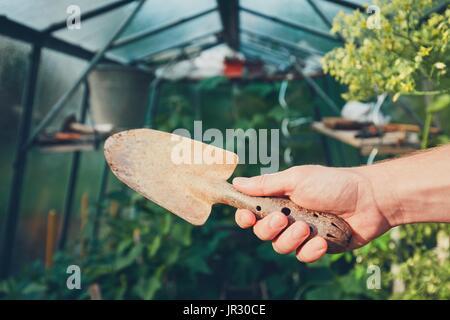 Work on the vegetable garden in the greenhouse. Gardener holding hand trowel. - Stock Photo