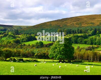 A late summer view of the lush landscape of County Wicklow, Ireland. - Stock Photo