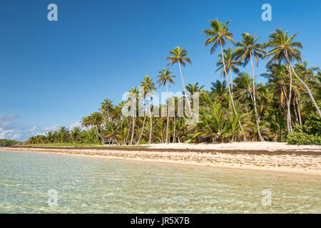 Beautiful exotic Caribbean beach with palm trees in Martinique (Anse Michel) - Stock Photo