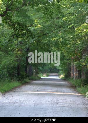 Gravel path in woods leading into horizon - Stock Photo