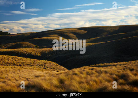 Tussock on Hills beside the Pigroot Highway, Maniototo, South Island, New Zealand - Stock Photo