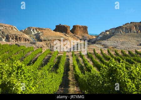 Mt Difficulty Vineyard, and historic gold sluicings, Bannockburn, Central Otago, South Island, New Zealand - Stock Photo