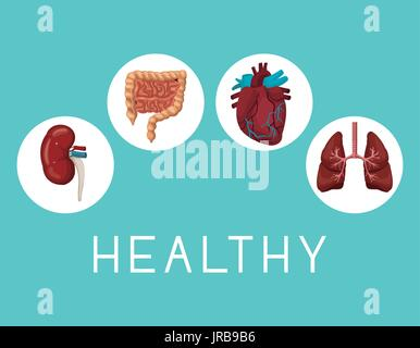 color background with icons circular frame intern organs human body text healthy - Stock Photo