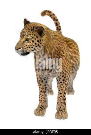 3D rendering of a big cat leopard isolated on white background - Stock Photo