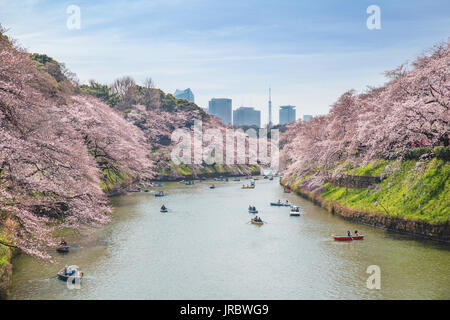 View of massive cherry blossoming in Tokyo, Japan as background. Photoed at Chidorigafuchi, Tokyo, Japan. - Stock Photo