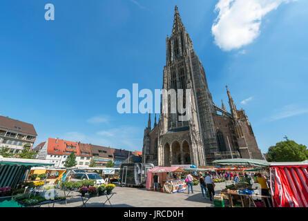 Market in front of the Münster, Münsterplatz, Ulm, Baden-Württemberg, Germany