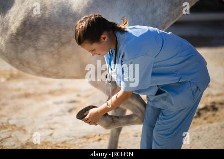 Side view of female vet examining horse hoof at barn - Stock Photo