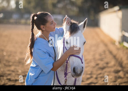 Side view of female vet checking horse ears while standing on field - Stock Photo