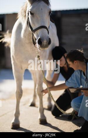 Female vet with jockey examining horse leg at barn - Stock Photo