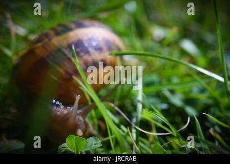 Snail Macro - Stock Photo