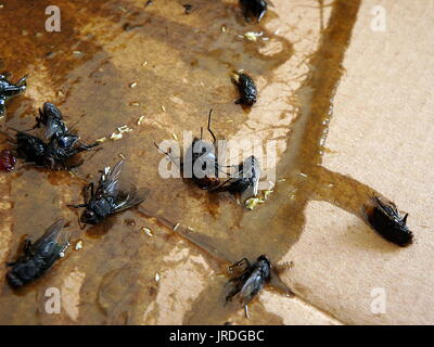 Flies caught on sticky fly paper trap - Stock Photo