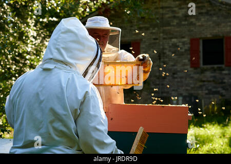 The golden color honey is the prize that bee keepers are looking for. Jim and Patti Butler of Vernon, Alabama get - Stock Photo