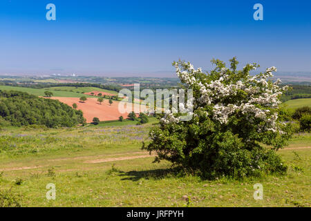 Looking north from the summit of Cothelstone Hill on the Quantock Hills towards Hinkley Point and the Bristol Channel, - Stock Photo