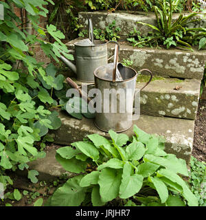 Two old galvanised steel metal garden watering cans on stone steps with green plant foliage, UK - Stock Photo