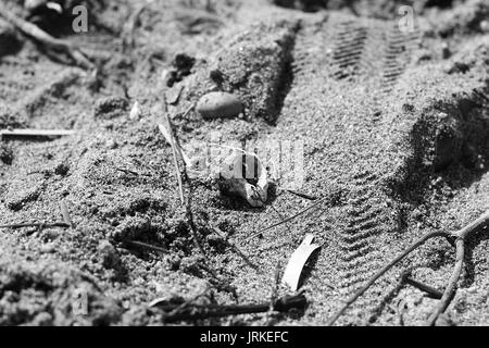 Black and white fish skull on the sand beach - Stock Photo