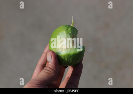 Close up of half eaten Psidium guajava - Stock Photo