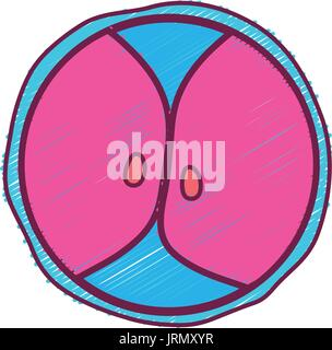 biology genetic embryo cells division - Stock Photo