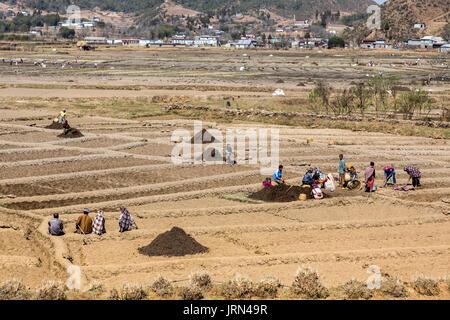 People working in fields, Meghalaya, India - Stock Photo