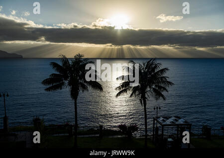 Two palm trees in front of sea at sunset, dramatic cloudy sky, Funchal, Madeira, Portugal - Stock Photo