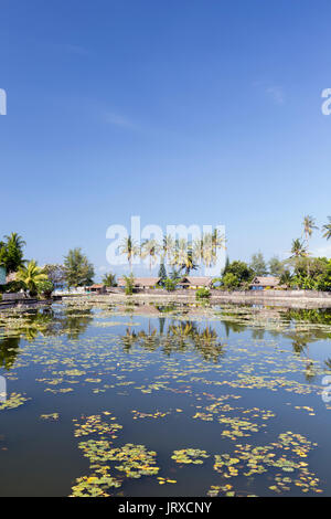 Lotus water lilies growing in the lagoon at Candidasa, Bali, Indonesia - Stock Photo