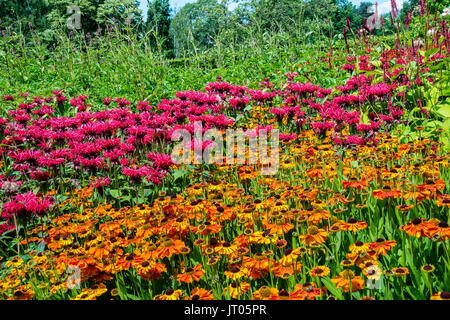 Perennial flowers Pink Monarda and Orange Rudbeckia in a herbaceous border. - Stock Photo