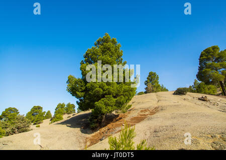 Pine and mountain landscape. High Atlas. Morocco, Maghreb North Africa - Stock Photo