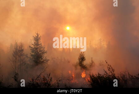 Sakha Republic, Russia. 4th Aug, 2017. Conducting a controlled burn to prevent the spread of wildfires in the Gorny - Stock Photo