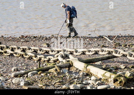 London, UK. 7th August, 2017. An afternoon mudlarker scans the River Thames foreshore near Greenwich with a metal - Stock Photo