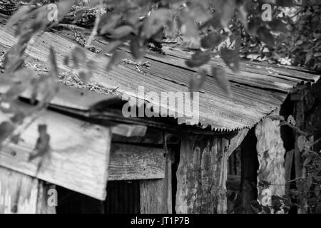 An old garden shed located in South Texas, showing the rusted tin roof and weathered wood framing - Stock Photo