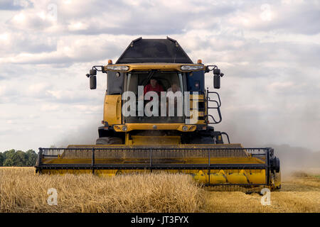 New Holland Combine Harvester at work harvesting wheat in rural Essex field - Stock Photo