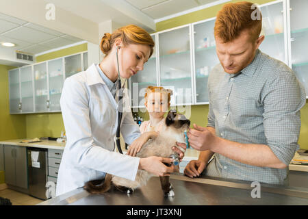 Woman veterinary ausculting cat with stethoscope at clinic - Stock Photo