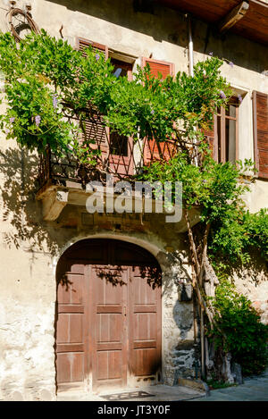 wisteria creeping on old house in medieval mountain village, shot on a bright summer day at Bard, Aosta valley, - Stock Photo