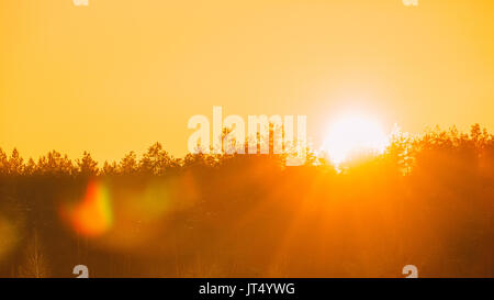Panorama Of Sun Over Horizon Woods Or Forest With Orange Sunset Sky. Natural Colors Of Evening Sky At Sunset. Nature - Stock Photo