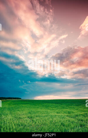 Countryside Rural Field Landscape Under Scenic Spring Blue Cloudy Dramatic Sky With White Fluffy Clouds. Skyline. - Stock Photo