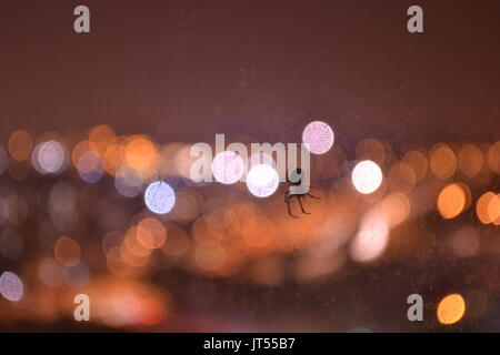 Small spider against out-of-focus city lights bokeh at night - Stock Photo