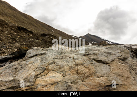 Fossil leaves on a rock on Spitsbergen on Svalbard island Norway - Stock Photo