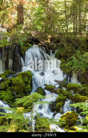 Clearwater Falls - Stock Photo
