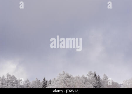 Snow capped trees and grey sky in Nozawa Onsen, Japan. - Stock Photo