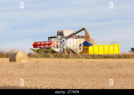 Farmer filling a trailer with freshly harvested wheat, Triticum aestivum,  using a Claas Lexion 650 Combine Harvester - Stock Photo