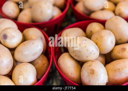 New fresh crop of gold potatoes on display at farmers market in baskets - Stock Photo