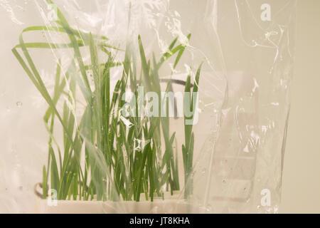 Leibniz institute of plant genetics and crop plant research ipk