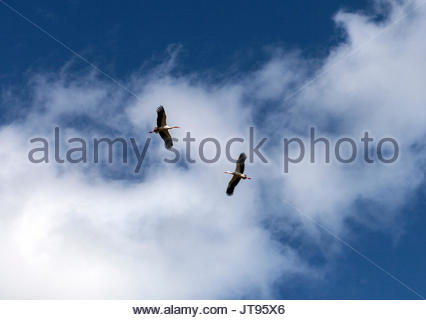 White storks on nest on large chimney, Lagos, Portugal and vicinity © Linda Dawn Hammond/ Alamy Feb., 2014 - Stock Photo
