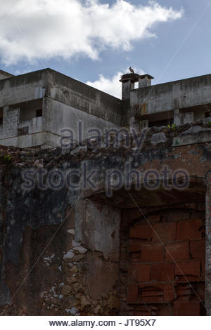 White stork on nest on chimney of abandoned building, Lagos, Portugal and vicinity © Linda Dawn Hammond/ Alamy Feb., - Stock Photo