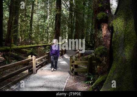 A visitor walking on a trail in protected old growth rainforest of Cathedral Grove, near Port Alberni, on Vancouver - Stock Photo