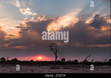Savuti Marsh at sunset, Botswana, Africa - Stock Photo