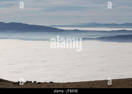 Some horses pasturing on top of a mountain over a sea of fog filling a valley, with some distant and misty mountains - Stock Photo
