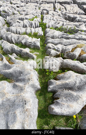 Limestone pavement above Malham Cove in Malhamdale, Yorkshire Dales National Park, England - Stock Photo