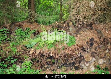 Dickicht, Unterholz, mit Holz in einem mystischen Wald - Stock Photo