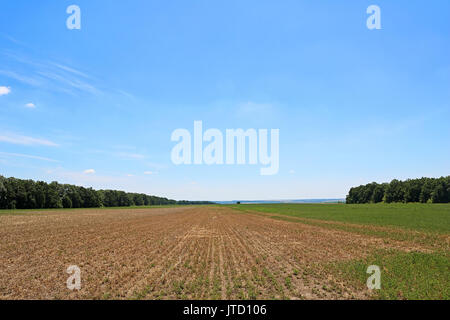 Field rests in summer. Fallow land - Stock Photo