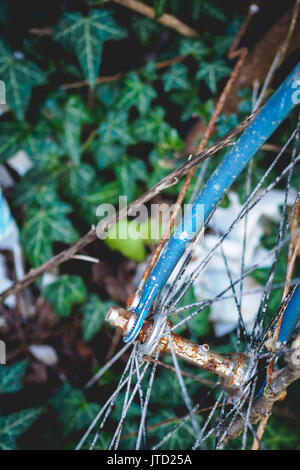 Detail of an abandoned old vintage rusty bicycle with ivy on the background found in rural shed in the Italian countryside. - Stock Photo